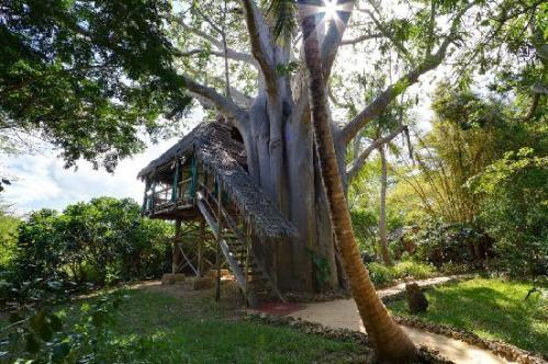 one-of-our-unique-treehouses Pulau Mafia, Tanzania, Afrika